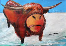 Highland Coo in the Snow